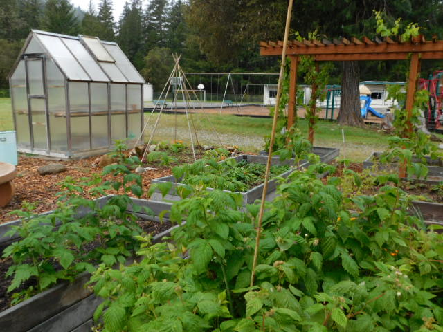 Mountain school garden (7)